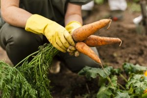 How to start a farming business in South Africa